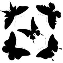 Silhouette stock photos and royalty-free images, vectors and illustrations Butterfly Template, Butterfly Design, Wooden Pattern, Butterfly Dragon, Celtic Art, Silhouette Vector, Cute Crafts, Digital Stamps, Zentangles