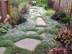 stone pathway with white star creeper between stepping stones | Stepping stones with narrow joints