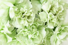 green carnations.. they do exist!