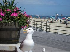 Ocean Beach Park, New London, Conn.