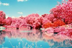 infrared photography - - Yahoo Image Search Results