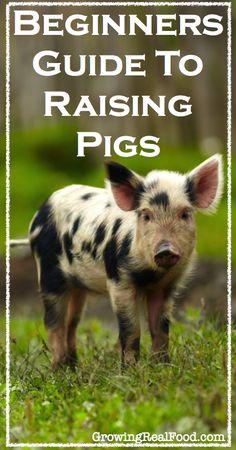 Beginners Guide To Raising Pigs | GrowingRealFood.com #raisinganimals #pigs #homesteading