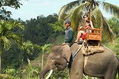 Αποτέλεσμα εικόνας για elephant ride bali