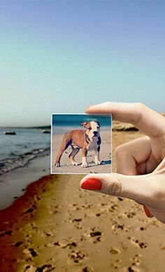 instagram magnets of your favorite furry friend