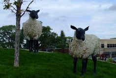 Whimsical sheep in one of Grand Junction's traffic circles, Oregon