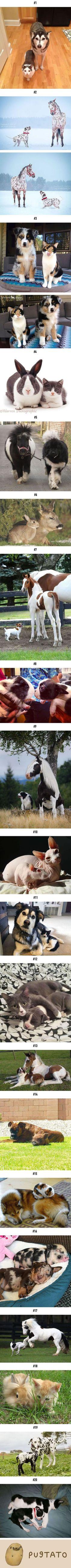 Ähnlichkeiten unter verschiedenen Tieren