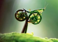 Incredible nature !!    Rate My Bike by Tustel Ico  Autres photos de Baptiste Oddos