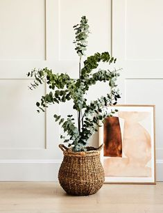 Faux Eucalyptus Tree Home Accessories Stores, Eucalyptus Tree, Large Baskets, Faux Plants, Bunch Of Flowers, Botanical Prints, Contemporary Furniture, Home And Living, Interior Inspiration