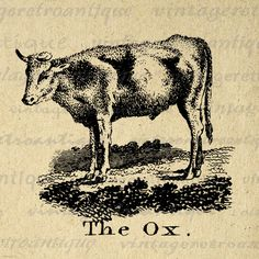 Digital Graphic Antique Ox Illustration Printable Animal Download Image Vintage Clip Art. High resolution digital image download from antique artwork for making prints, transfers, tea towels, papercrafts, pillows, and more. Great for use on etsy items. This digital image is high quality, large at 8½ x 11 inches. Transparent background version included with all images.