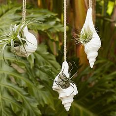I love these for so many reasons! Adds that beachy feel all year round and houses really low key plants! Perfect for inside or outside or both! (Hanging Shell Planters)