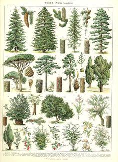 1936 Illustration botanique vintage Images par FrenchVintagePrints