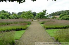 Molinia caerulea subsp. arundinacea 'Poul Petersen' at Scampston Hall.  Piet Oudolf, garden designer