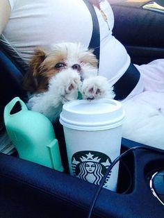 Hmm im feeling kinda tired, GIMME SOME COFFEEE!!