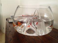 George...my Royal Fish!!
