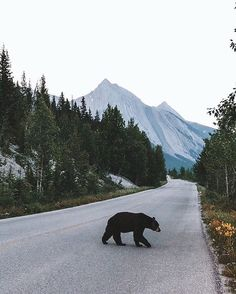 Banff during summer | Art By @shortstache Tag #naturegeography and follow us to be featured! by nature.geography