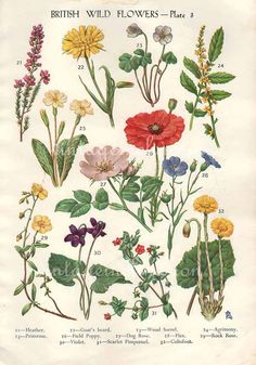Antique Botanical print British Wild Flowers bookplate, vintage botanical…
