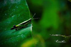 Photo listed in Macro Shot taken with NIKON 2 shares and 10 likes. Nikon D3100, Macro Shots