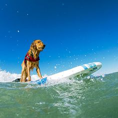 Top 22 dog-friendly vacations - You can take your best pal with you on these getaways around the West - Huntington Beach, CA