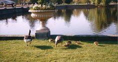 1999 Famigliola a Kew Garden