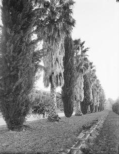 Riverside: CARRIAGE, PALMS, IRRIGATION - 1910 Tibbitts Glass Plate Negative   eBay