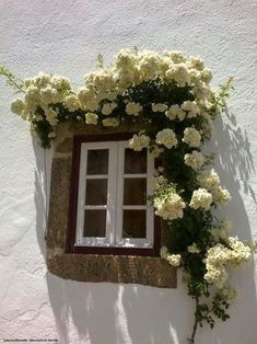 This is the window to my bedroom in my future cottage in France!