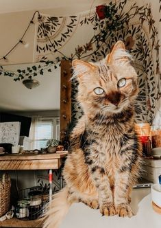 Cute Cats And Dogs, I Love Cats, Crazy Cats, Animals And Pets, Cats And Kittens, Baby Animals, Cute Animals, Pretty Animals, Beautiful Cats