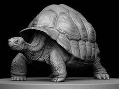 Pixologic ZBrush Gallery: Turtle