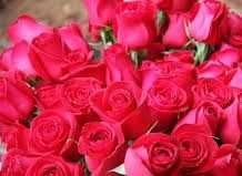 Benefits And Uses Of Red Rose And Rose Petals And Its Applications Flowers Rose Wallpaper Rose
