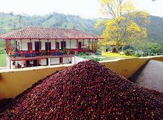 Espectacular Finca Cafetera en Salento - Quindio Colombia