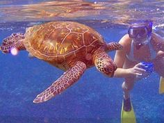 Swam with Sea Turtles...i was this close when i was in maui snorkling