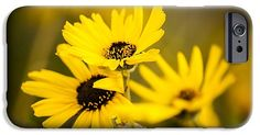 Gorgeous Yellow California Sunflowers on a iPhone 6S Case She Would Love!