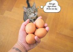 Bonenmeuk, het ziet er niet uit maar smaakt zó goed! - Aylovelife Eggs, Food, Essen, Egg, Meals, Yemek, Egg As Food, Eten