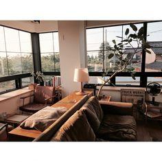 YUHさんの、リビング,観葉植物,ナチュラル,Light,TRUCK,自然光,TRUCK FUNITURE,大きな窓,フィカス・ベンガレンシス,FKソファ,白い家,自然と暮らしたい,SLOW LIFE STYLE,のお部屋写真