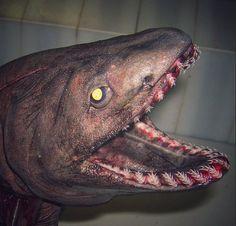 画像|怖すぎぃ!!こんなん遭遇したら絶望しかないw深海魚ギャラリー | カルロ・グローチェ 閲覧注意