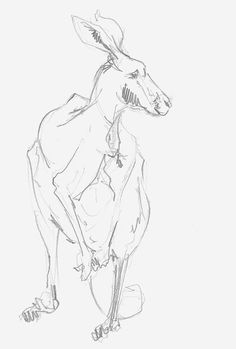 Mel Griffin, kangaroo illustration. graphite drawing on paper.
