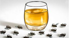 How to Get Rid of Flies Quickly (Inside and Outside) - Way to Steel Health Insect Repellent Plants, Lactobacillus Gasseri, Get Rid Of Flies, Healthy Kidneys, Homemade Crafts, How To Get Rid, Cleaning Hacks, Wine Glass, Alcoholic Drinks