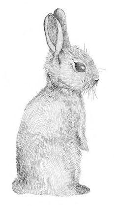 Rabbit by sillyshinydiamonds