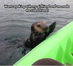 Water Animal #Cutest, #Friend
