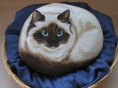 Kuva vaaleasta kissasta
