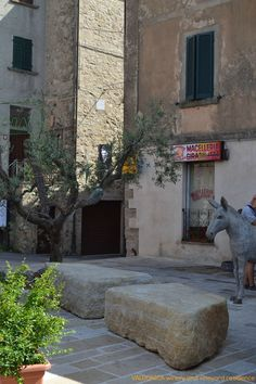 #Olivetree and #donkey statue in the main square of the #village of Roccatederighi , 5 minutes far from VALDONICA.