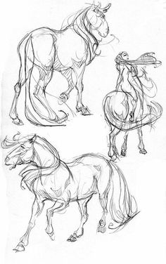 Discover thousands of images about How to draw horses. My friend Meghan really loves horses, so I geuss that I gonna to make a horse sketch for her! Horse Drawings, Animal Drawings, Animal Sketches, Drawing Sketches, Sketching, Lady Drawing, Horse Anatomy, Animal Anatomy, Horse Sketch