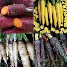 Winterwortelen 3-kleuren Historisch Mengsel