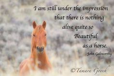 """""""I am still under the impression that there is nothing dive quite so Beautiful as a horse"""" John  Galworthy""""# beautiful horse quotes"""