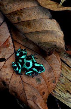 Jungle Jewel by Paul Bratescu