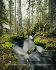 Trolldalen Nature Reserve, Örebro Län