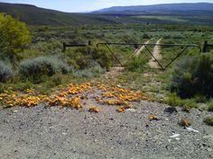 Little Karoo Big Sky Country, Country Roads, Velvet Sky, Smell Of Rain, Eternal Sunshine, Heartland, Cape Town, Homeland, Countryside