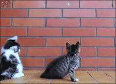 cats (.gif click it)