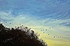 Olhares do avesso: Liberdade para quê?! (miniconto) – por Rafael Belo...  #pequenoconto #tortura #esperança #shortstory #torture #hope #opowiadanie #tortury #nadzieję #Duǎnpiānxiǎoshuō #kùxíng #xīwàng #Kurzgeschichte #Folter #Hoffnung #Bref #latorture #Espoir #image #imagem #blog #bird #sky #bluesky #nature #picture #picturenature