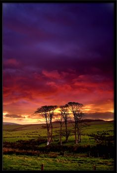 New light old trees26-10-2007      Argyll and Bute, Scotland  #Beautiful #Places #Photography