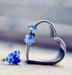 ❥●❥ ♥ ❤ Forget me not heart ❤. Heart In Nature, All Heart, I Love Heart, Happy Heart, Heart Art, Heart Wallpaper, Love Wallpaper, Heart Images, Forget Me Not